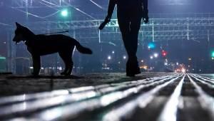 Hundelufter hører svagt råb om hjælp: Gør grusom opdagelse
