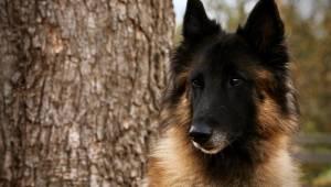Ensom hund løber alene rundt i frostvejret